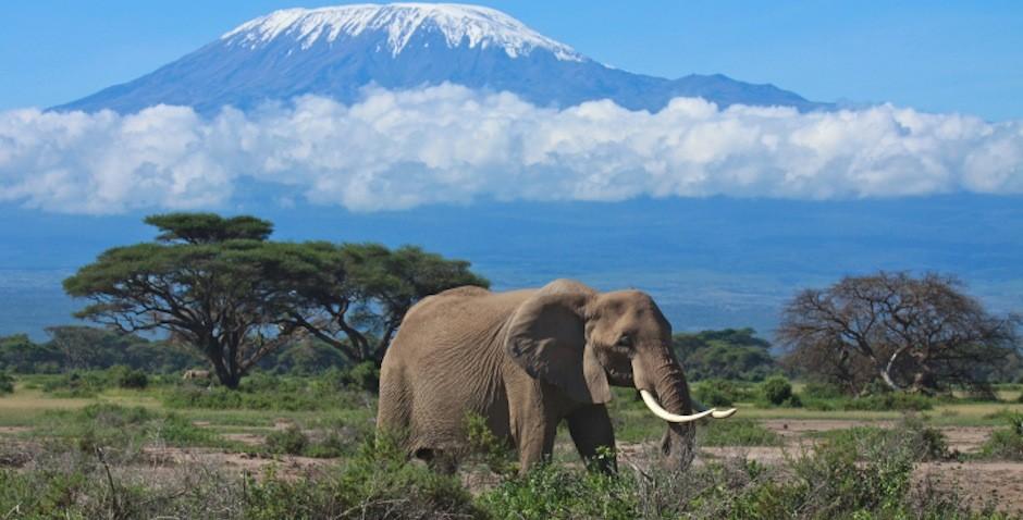 Картинки по запросу Zinga, Танзания фото